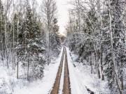 Elvijs Sisenis Mežniecības ceļš
