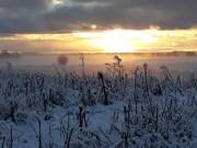 Inita Bekmane Ziemas saulriets